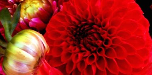 Lindéns Blommor